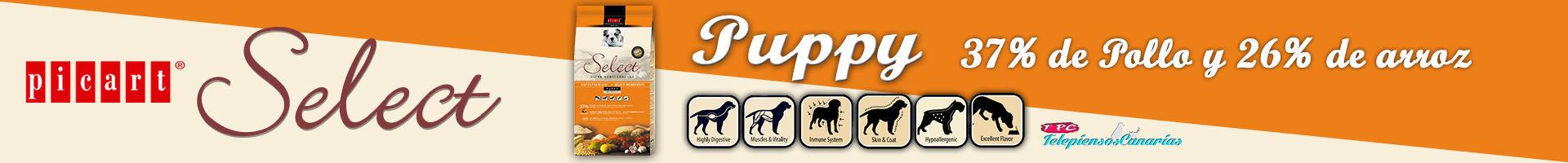 Select puppy, pienso para cachorros con 37% de pollo y 26% de arroz