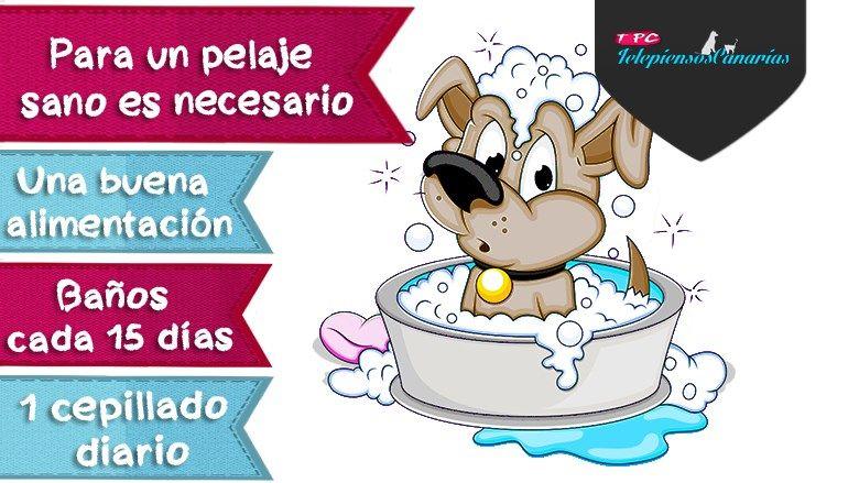 Cuidado del pelaje del perro, alimentación, higiene y cepillado