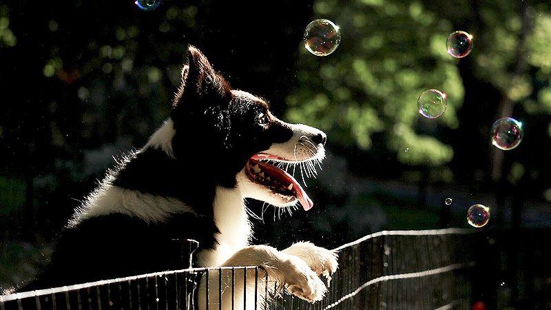 Los perros usan el lenguaje corporal para comunicarse