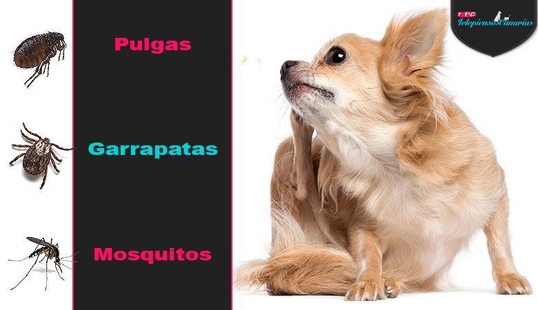 El control de los parásitos es esencial para los perros