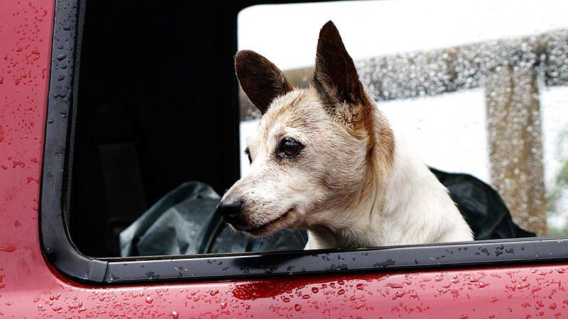 Antes de viajar también se debe acudir al veterinario