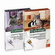 Advantage para gatos antiparasitario externo elimina las pulgas