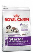 Royal Canin giant starter para cachorros y madres gestantes