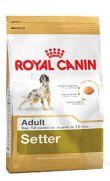 Royal Canin raza setter adulto alimentación seca para perros