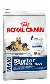Royal Canin maxi starter Telepiensoscanarias